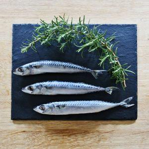 nutriment mackerel pet dog food