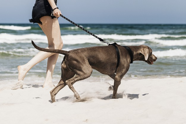 person walking dog on beach