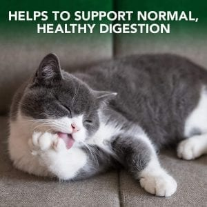 cat food support health digestion