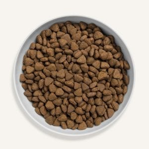 cat food game cats dry